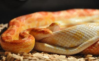 image for World Snake Day!
